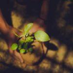 Workshop on Environmental Leadership through Volunteerism